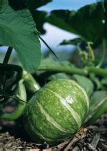 夏日适合幼儿吃的蔬菜