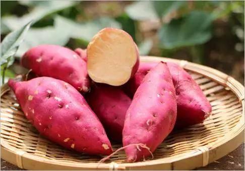 红薯.jpg